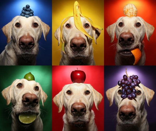 Quais Frutas posso oferecer ao meu cachorro