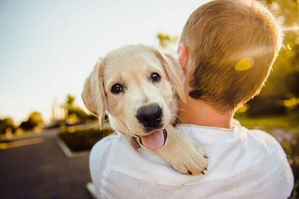 7 Motivos para Castrar seu Animal de estimação