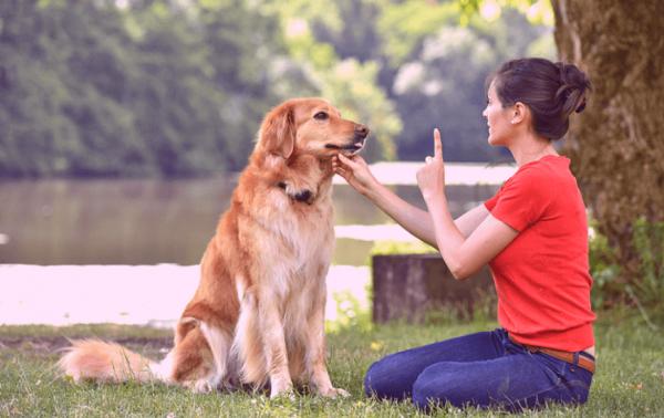 Quais são as Habilidades de treinamento mais importantes para cães