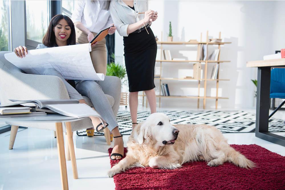 como construir um local confortável para o seu cachorro.