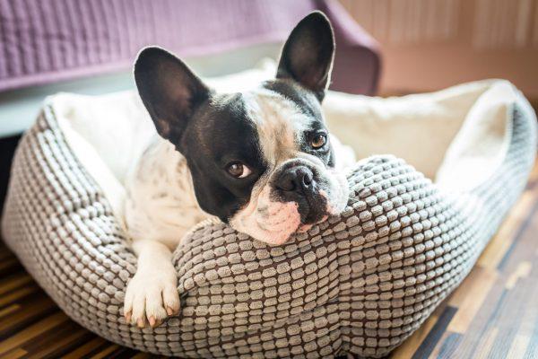 Como construir um cantinho  seguro e confortável para o seu cachorro?