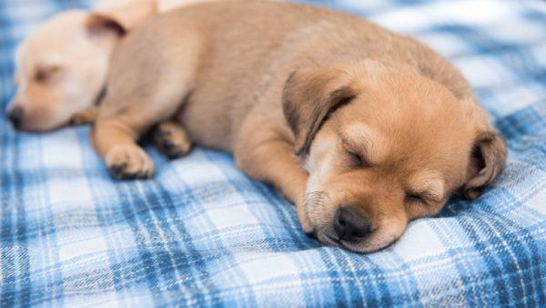 Razões para que seus animais de estimação não durmam na cama