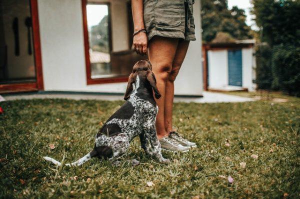 Erros ao tentar conquistar uma mulher que gosta de cachorro
