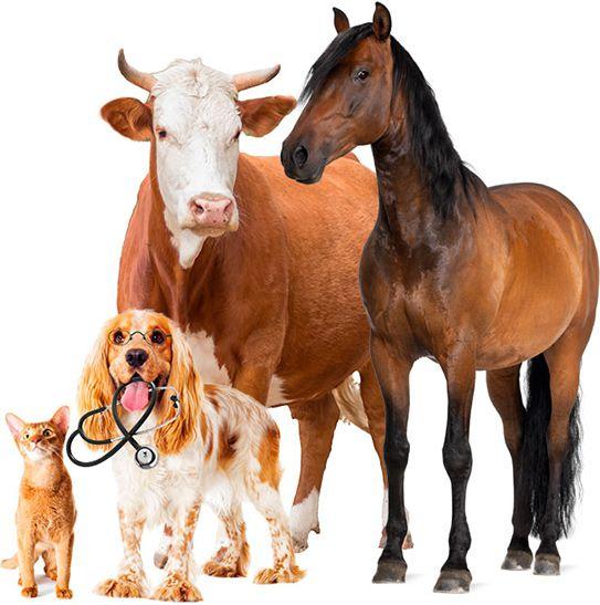 O que é um plano de saúde animal?