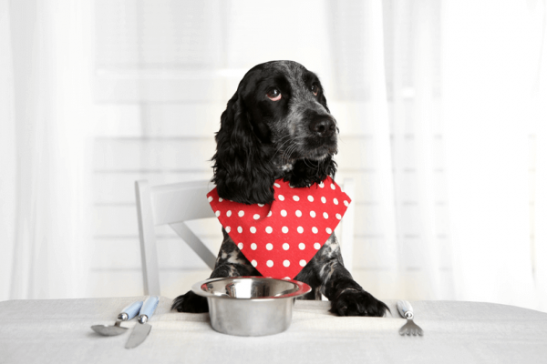 Você está alimentando seu cão com a quantidade certa?