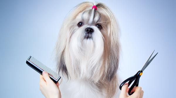 Onda de calor se aproximando!Você deve Tosar seu animal de estimação?