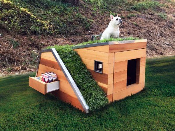 Casa de cachorro sustentável tem um telhado verde e um ventilador movido a energia solar