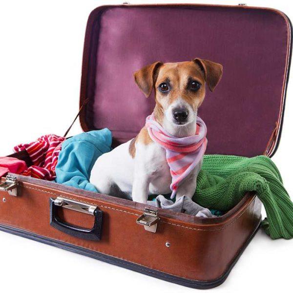 Como viajar com meu cachorro?